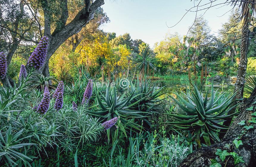 06/ Jardin botanique &quot;Les Cèdres&quot;<br /> Le &quot;lac&quot;: vipérines (Echium fastuosum), aloès (Aloe), oliviers (Olea), mimosa à feuilles de saule (Acacia salicifolia), yucca (Yucca).