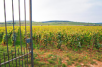 Vineyard. Clos des Epenaux. Pommard, Cote de Beaune, d'Or, Burgundy, France