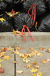 Bags stuffed with autumn leaves wait to be picked up on a sidewalk in Medford, Oregon