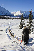 Aaron Burmeisters team mushes down embankment to Puntilla Lake outside Rainy Pass Chkpt 2006 Iditarod AK