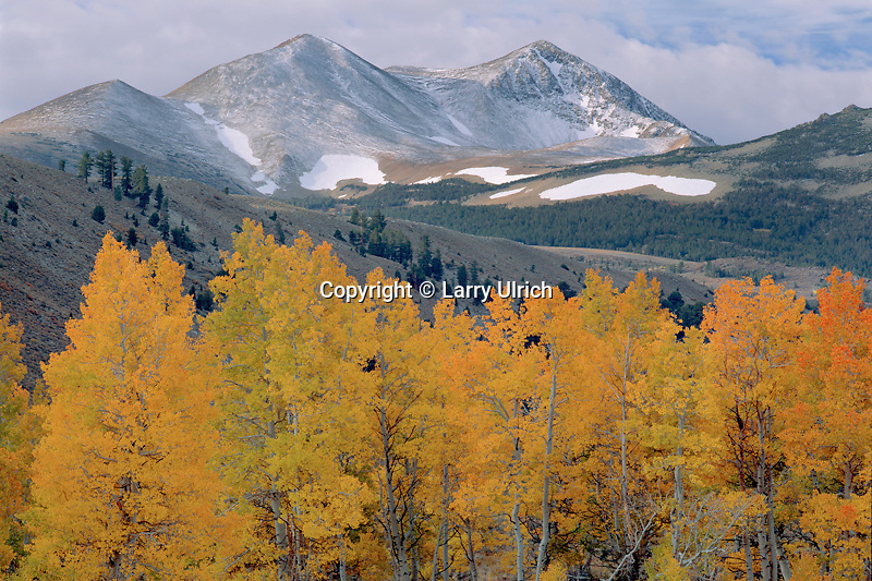 Aspens and Dunderberg Peak<br />