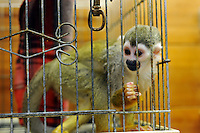 Squirrel monkeys for sale at 6,235 US$ for a male and 7000 US$ for a female, members of the shop are offeed a 20% reduction. The animals are for sale in the worlds most exotic pet shop called Noah Inner City Zoo. The Noah Inner City Zoo is a pet shop that sells exotic animals. The 'zoo' claims to have more than 300 species for sale, many of which are rare and some are even endangered.