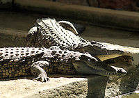 Stock image - pair of crocodiles lying idly in Paphos zoo, Cyprus.<br /> <br /> (For editorial use only)