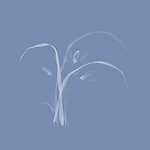 Wild orchids, beautiful minimalistic floral design in oriental style, Japanese Zen ink painting illustration white on light blue background