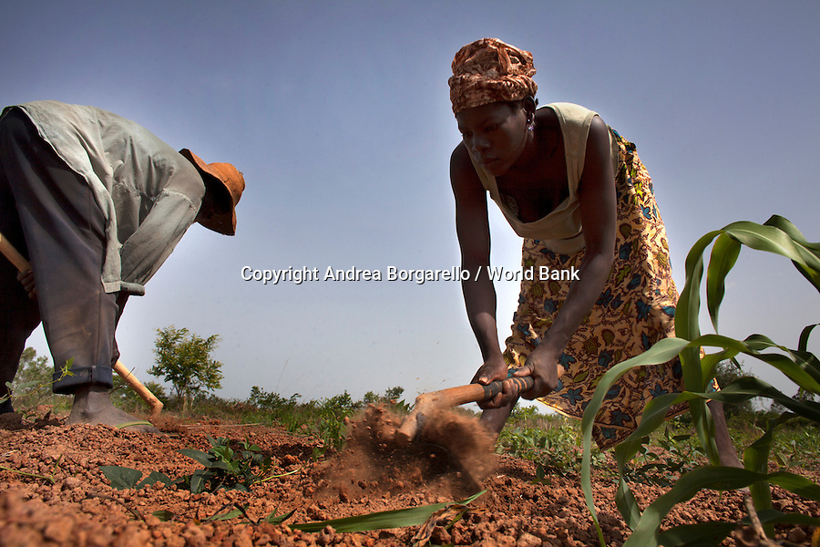 Burkina Faso, Plateau Central. Land is the main source of life. This woman, as caretaker of her family, is growing crops to feed her children.