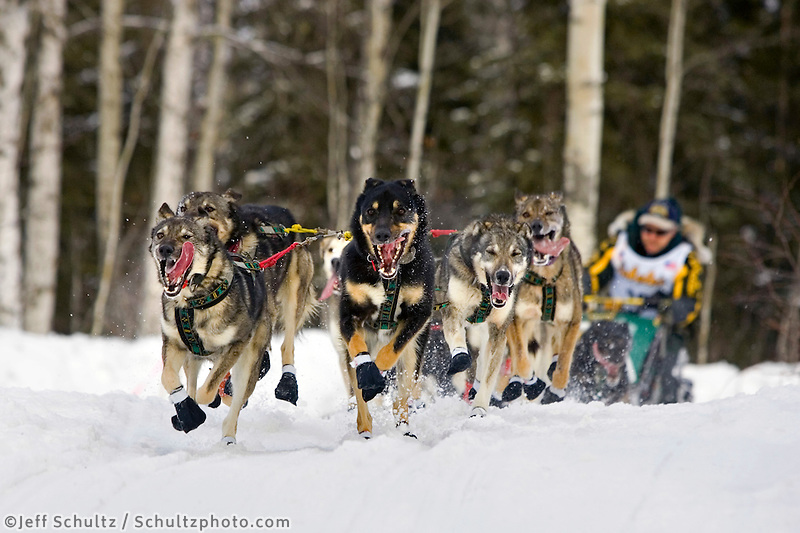 Jeff Kings sled dog team running on trail on Long Lake @ 2006 Iditarod Restart Willow AK Winter