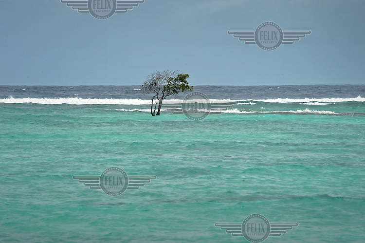 A mangrove tree stands alone on an islet now completely submerged into the sea. With rising sea levels, saltwater comes onto the islands and destroys vegetation and tree life. The situation is worsened by the building of a causeway linking islets together causing a change to the natural currents.