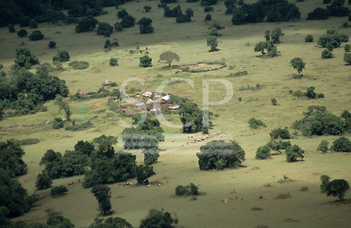 Lolgorian, Kenya. Maasai boma compound - family farmstead - in pastureland with cattle grazing.