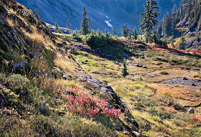 brilliant autumn colors in meadow, Austin Pass, North Cascades National Park, Washington State