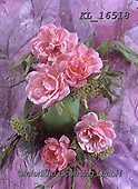 Interlitho-Helga, FLOWERS, BLUMEN, FLORES, photos+++++,pink roses,KL16518,#f#, EVERYDAY