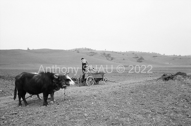 Bisericami, Transylvania<br /> Romania<br /> April 29, 1992<br /> <br /> Sowing seeds