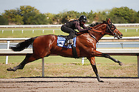 #3Fasig-Tipton Florida Sale,Under Tack Show. Palm Meadows Florida 03-23-2012 Arron Haggart/Eclipse Sportswire.