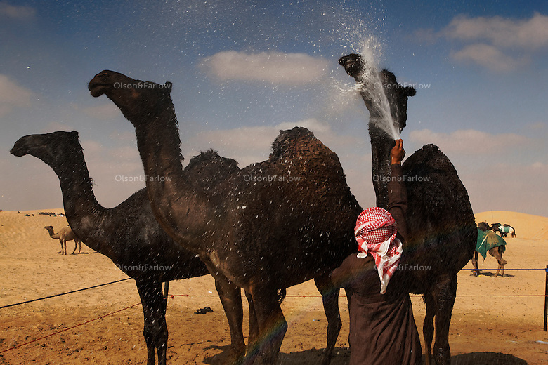 The Ramez Al Menhali compound... general scenes and then they wash camels in preparation for contest. The pampered beast was once considered traditional transportation.