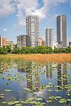 Lake in Ueno Park, Tokyo, Japan