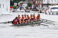 Race 18 - Remenham - Hollandia vs Waiariki