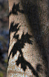 Patterns among back-lit plants seen in the Esopus Bend Nature Preserve in Saugerties, NY, on Saturday, November 11, 2017. Photo by Jim Peppler. Copyright/Jim Peppler-2017.