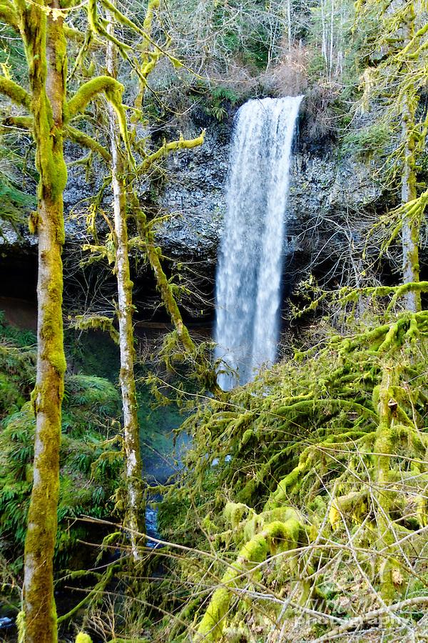 Shellburg Falls seen through the trees