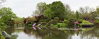 65021-03705 Japanese Garden in spring,  Missouri Botanical Garden, St Louis, MO