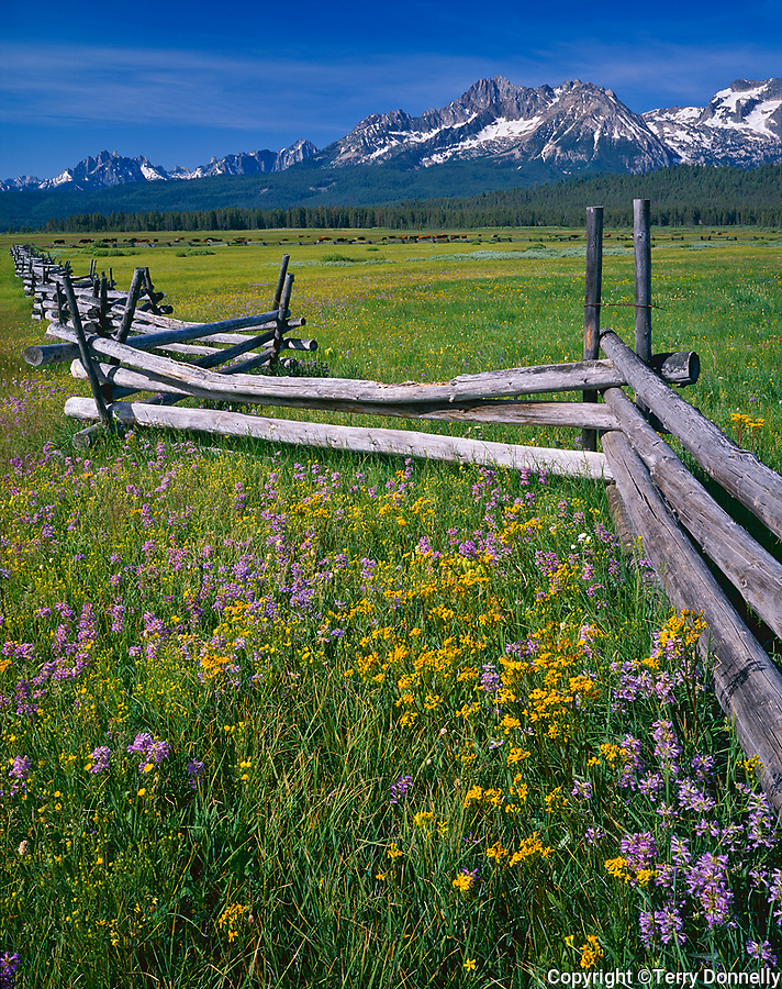 Sawtooth National Recreation Area, ID<br /> Rail fence runs through a meadow of penstemon and summer wildflowers with peaks of the Sawtooth Range in the distance