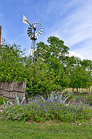 A texas windmill hidden in the trees with some salvia and century plants growning in front in the Texas Hill Country.