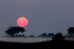 Mist over savanna at sunrise, Busanga Plains, Kafue National Park, Zambia