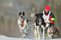 2003 Limited North American Championship. Sled dog races held annually in Fairbanks at the Dog Mushers Hall. Four to eight dog teams race from 4 to 10 mile sprint races.