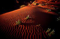 The sun slowely starts to set over the rippled sand dunes of the spectacular Strzelecki Desert.