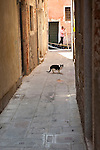 Cat in alley with gondolier in background. Venice, Italy