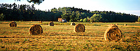 Round hay bales dot a field in York, Msine. Photograph by Peter E. Randall