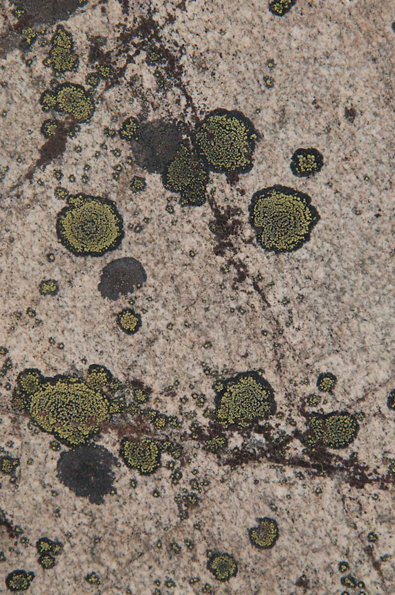 Rock Face and Lichens, North Cascades National Park, Washington, US