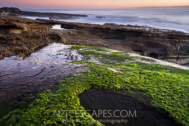 Limestone rocks with water pools and green seaweed on Truman Track at twilight in Punakaiki, Paparoa National Park, West Coast, Buller Region, New Zealand