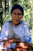 San Juan del Oro, Peru. Coffee picker in the fields with his harvested coffee beans.
