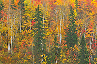 Autumn colors along the Vermilion River in the Sudbury District. The river flows into Lake Huron<br />