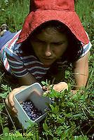 HS38-002z   Blueberries- woman picking wild blueberries