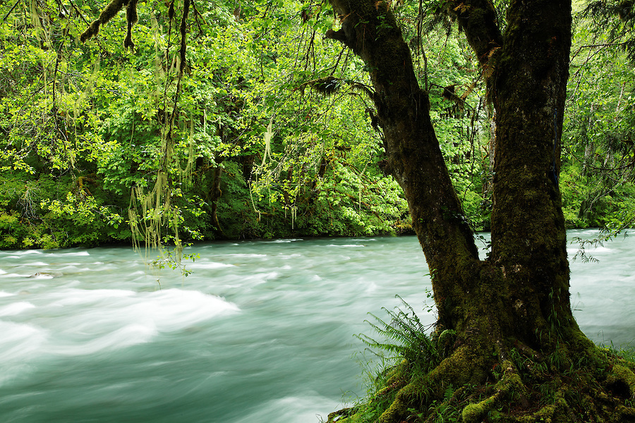 Dosewallips River, Jefferson County, Washington, USA
