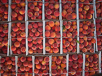 Fresh Cling peaches for sale at the Wednesday Farmers market in Uptown Westerville, Ohio.