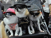 Lan, Moldai and Jin wear sunglasses and hats at the Osaka Pet Expo fashion show, Japan.<br /> 25-Sept-11.<br /> <br /> Photo by Richard Jones