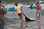 pulling the fish ashore at the fish market of puerto lopez ecuador