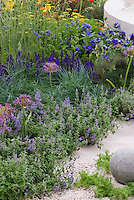Allium, Nepeta Blue Wonder, ornamental ball, wall, blue and purple color theme tones with yellow and red, Achillea, papaver poppies, ornamental grasses etc, wide mix of plants, Salvia