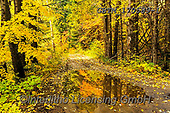 Tom Mackie, LANDSCAPES, LANDSCHAFTEN, PAISAJES, photos,+America, American, Americana, North America, Pacific Northwest, Tom Mackie, USA, Washington, Wenatchee National Forest, autum+n, autumnal, colorful, colourful, country lane, fall, horizontal, horizontals, landscape, landscapes, lane, natural, nature,+no people, path, pathways, peace, peaceful, reflecting, reflection, reflections, scenery, scenic, season, track, tranquil, tr+anquility, tree, trees, wilderness, yellow,America, American, Americana, North America, Pacific Northwest, Tom Mackie, USA, W+,GBTM170589-1,#l#, EVERYDAY