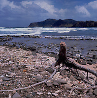 Driftwood on Caribbean beach, St Lucia, West Indies. circa 1975.