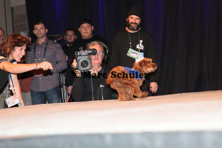 Katy Perry's Hund Butters im Mittelpunkt des Interesses - Draft Pressekonferenz, Sheraton Downtown Phoenix Hotel