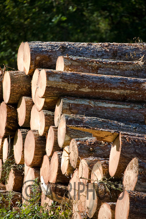 23.10.2010 Newly Felled timber stacked awaiting transport from the forest.©Tim Scrivener Photographer,Vine Cottage,.Barholm,Stamford,Lincolnshire,PE9 4RA. 07850 303986