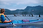 Orca whales, sea kayaker, Vancouver Island; Inside Passage, Johnstone Strait; Blackfish Sound; British Columbia; Canada;