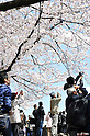 April 7, 2012, Tokyo, Japan - Cherry blossoms in full bloom are seen at Sumida Park in Taito ward, Tokyo on Saturday, April 7, 2012. (Photo by AFLO) [1160] -ty-