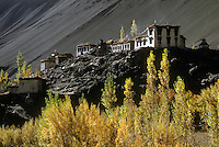 The village of ALCHI and the AUTUMN COLORS of its trees stand out against the barren Himalayan hills - LADAKH, INDIA