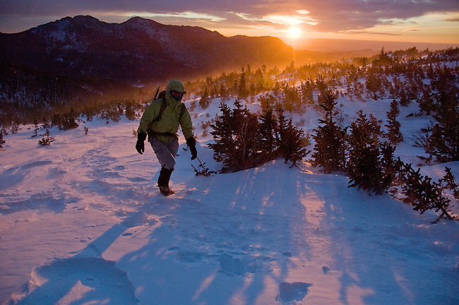 Hiker (MR) dressed for cold and wind in krummholz at sunrise, near treeline in winter, Rocky Mountain National Park; blowing snow, February 2008, Colorado, USA, Rocky Mountains (MR).