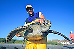 J. Nichols Holding Black Sea Turtle