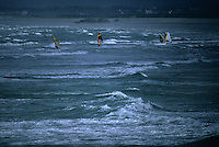Europe/France/Bretagne/29/Finistère/Pointe de la torche: Windsurf