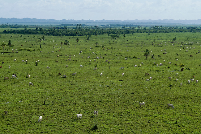 Guatemala, Petén, view on a cleared area for cattle at the edge of the Mayan Biosphere Reserve.